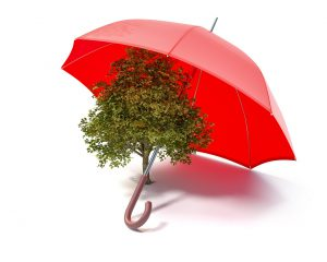 Tree Under Umbrella